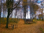 In the Autmn forest