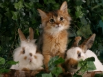 Kitten and bunnies