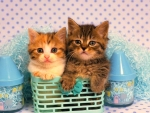 little cats