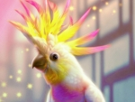 Magic Cockatoo