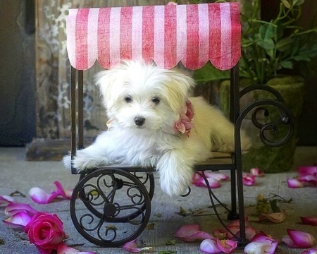 Cute valentine dogs animals background wallpapers on desktop nexus image 2081417 - Cute valentines backgrounds ...