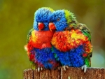Cute bird couple
