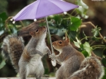 Two squirrels and an umbrella