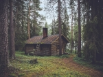 Cabin in the Forrest