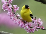 lovely bird on a spring branch