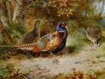 Autumn Covert - Pheasant F