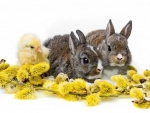 cute spring bunnies and chick