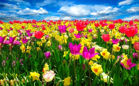beautiful spring desktop wallpaper rainbow - photo #48