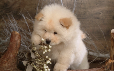 Cute Puppy - pet, cute, flowers, animal, puppy, dog