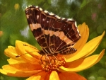 Brown Butterfly f