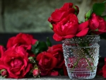 Red Roses f