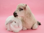 Lamb and white bunny