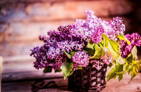 Lilac Tag wallpapers Page 2: Lilac Hydrangea Flower Liac Summer ...