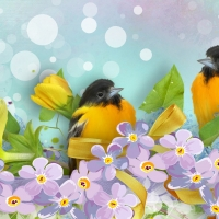 Yellow Spring Birds
