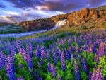 waterfall flowing through the field of lupine