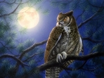 Moonlight Owl