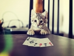 Cat Poker Face
