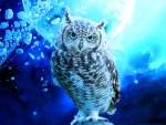Moonlight Owl!