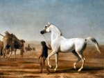 Wellesley Grey Arabian