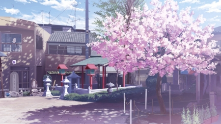 Anime street other anime background wallpapers on - Anime cherry blossom wallpaper ...