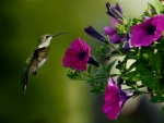 Bird and purple flower