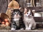 Cute Kittens F2Cmp
