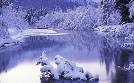 Winter Setting - river, white, snow, calm, nature, frost, forest, winter