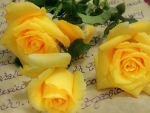 Yellow Roses~Friendship ♥ Joy ♥ Caring