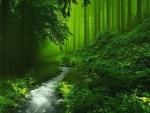 Beautiful forest with a stream