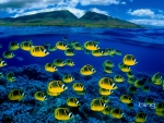 Composite image of raccoon butterflyfish underwater Maui Hawaii