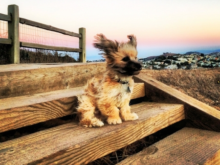 Windy Day - Dogs & Animals Background Wallpapers on ...
