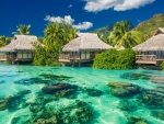 gorgeous tropical resort bungalows
