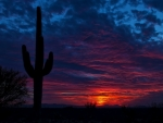 tucson arizona beautiful desert sunset