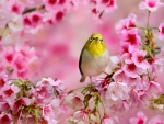 Small Yellow Bird Between the Blossoms
