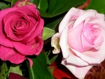 Pink and a Pale Pink Roses