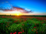 Spring field at sunrise