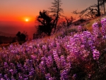 Sunset wildflowers