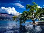 Lake-Wakatipu-Queenstown-New-Zealand