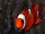Cute Red Fish