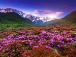 Wildflowers on mountain slope