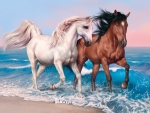 Two Stallion on the Beach