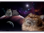 Planet of cats