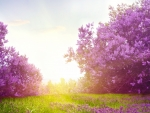 Lovely Lilac Morning