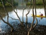 Man canoes in Marramarra Creek New South Wales  Australia