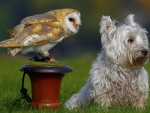 Puppy and Barn Owl