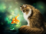 The cat and the golden fish
