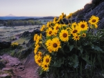 Horsethief Butte, Washington, in Bloom