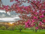 pink blossomed tree at sunset
