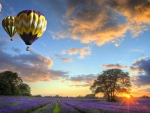 Air Baloons Over Lavender Field