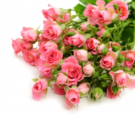 bunch of roses flowers amp nature background wallpapers on